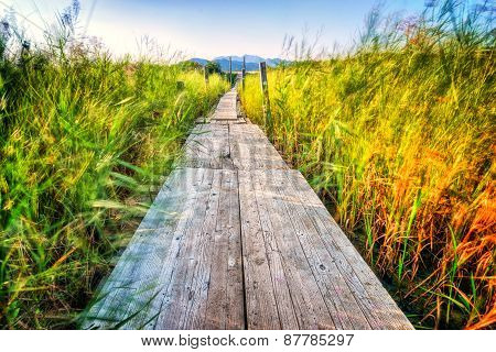 Wooden Pier Which Extends Across The Marshes And Greenery