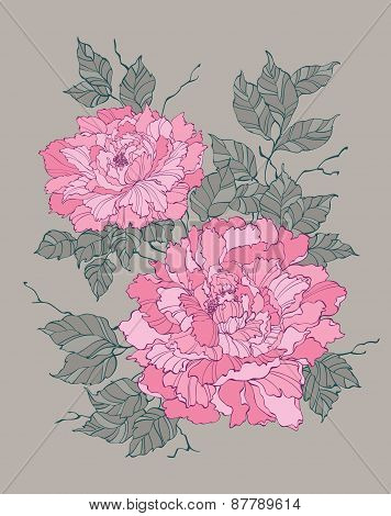 Pink Peony Rose Flower On Grey Background Illustration