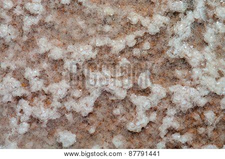 Dried sea salt on the beach