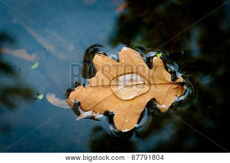 Yellow leaf floats in the river