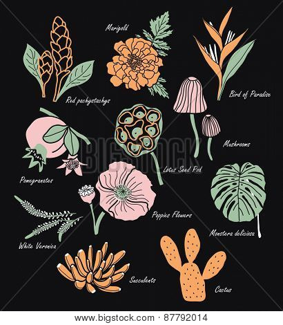 Vintage Flowers Illustration 1