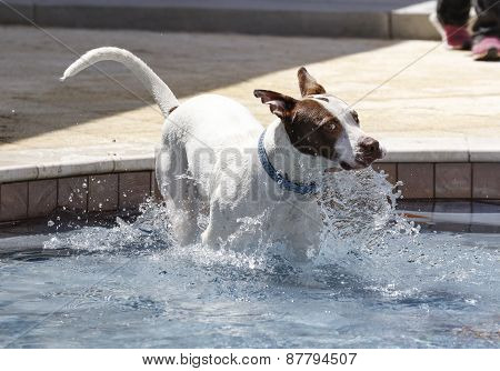 Dog jumping into a pool