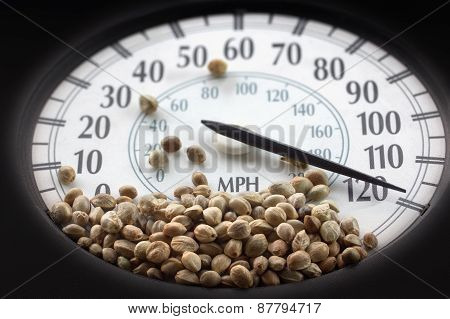 Car Speedometer With Hemp Seeds On It