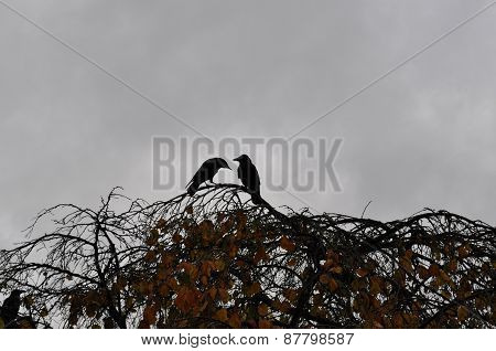 A couple of birds perching on a branch