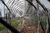 picture of razor  - Leaves collected in razor wire at Joliet Juvenile Detention Center - JPG