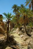 stock photo of wanton  - few palm trees at the small river in desert oasis sahara tunisia - JPG
