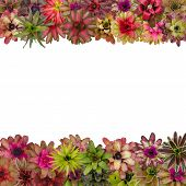stock photo of bromeliad  - bromeliad frame isolated on white background - JPG