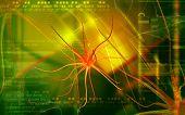stock photo of neuron  - Digital illustration of  neuron  in colour  background - JPG