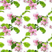 stock photo of apple blossom  - vector seamless pattern with spring flowers of apple tree - JPG