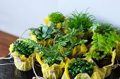 pic of foliage  - Outdoor foliage plant in pots for small garden patio or terrace  - JPG