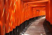 foto of inari  - Kyoto Japan  - JPG