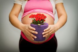 stock photo of pot-bellied  - pregnancy woman giveing a flower pot  - JPG