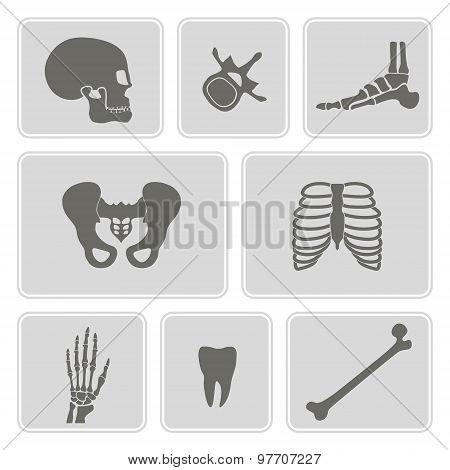 set of monochrome icons with human bones