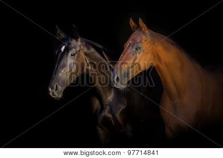 Two horse on black