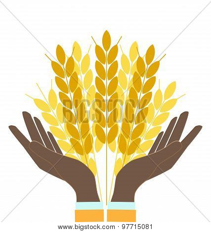 Hands Holding Wheat Ears, Agribusiness, Agrobusiness
