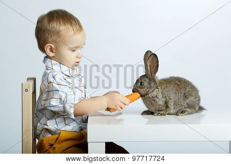 little boy feeding rabbit with carrot