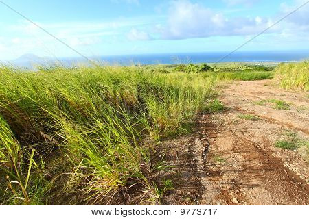 Sugar Cane Fields Of St Kitts