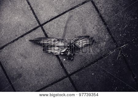 Dead Bird On Pavement, Wings Spread