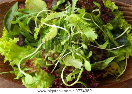Fresh mixed green salad on plate close up
