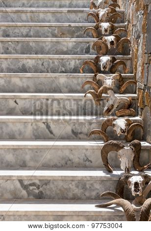 Goat skull on a stone stairs.
