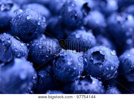 Background Full of Fresh Ripe Sweet Blueberries Covered with Water Drops. Summer Berries, Harvesting Concept