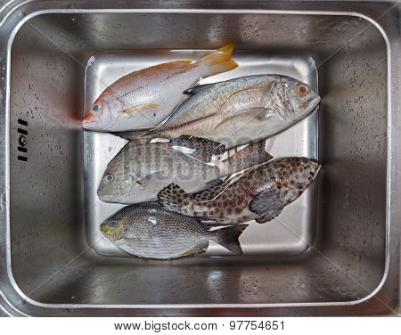 Fresh Fish Assortment In Metal Basin With Water