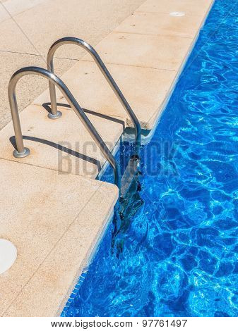 Metallic Pool Ladder