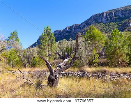 A picturesque dead tree in the mountains on a sunny day