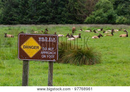 Danger Wild Elk