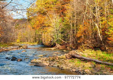 Meandering Autumn Creek