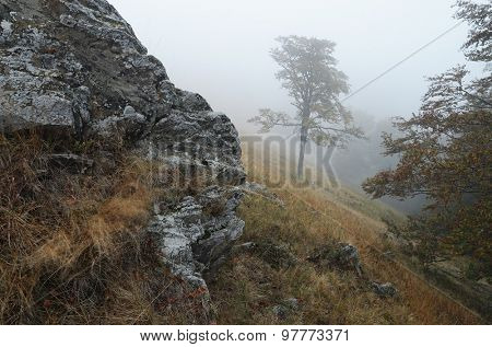 Lone tree in the fog. Autumn landscape in the mountains with rocks and woods. It's a nasty day. Carpathians, Ukraine, Europe