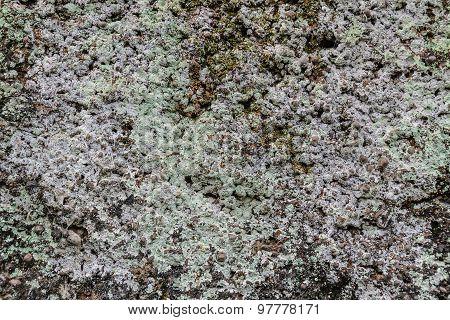 Fungi On Laterite Stone