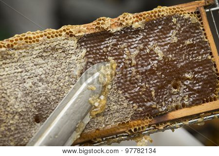 beekeeper removed beeswax