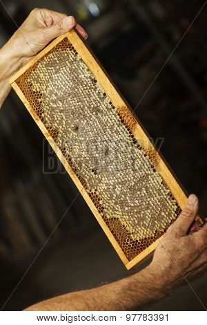 honeycomb full of beeswax and honey