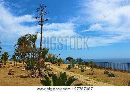 Cactus by Ocean