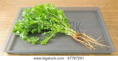 Coriander Or Chinese Parsley On A Grey Tray