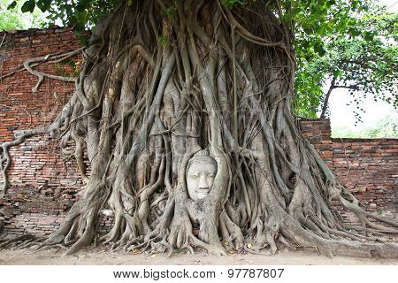 Buddha Head Overgrown By Fig Tree In Wat Mahathat. Ayutthaya Historical Park, Thailand.