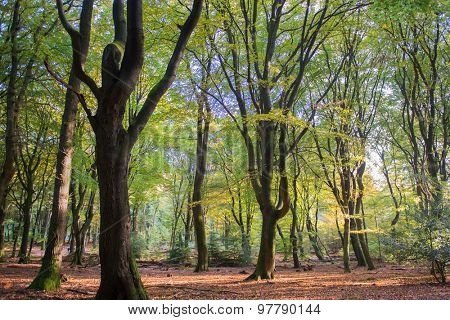 landscape forest with leaf trees and many foliage