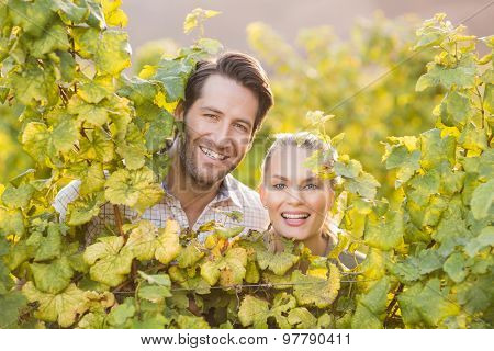 Two young happy vintners looking at camera from behind grape plants in the grape fields