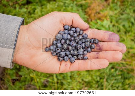 handful of  huckleberries