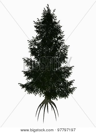 Colorado, blue or green spruce, picea pungens tree - 3D render