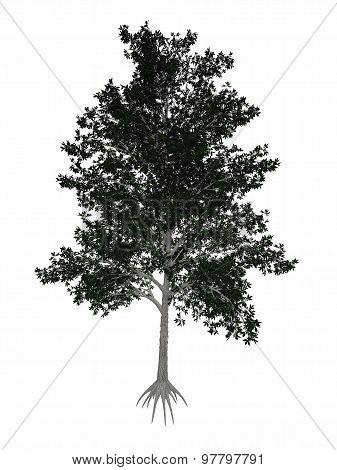 Shagbark hickory, Carya ovata tree - 3D render