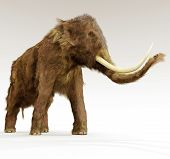 Постер, плакат: Woolly Mammoth On White Background