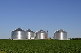 picture of soybeans  - New round steel grain bins in a soybean field reflect the early morning sun - JPG