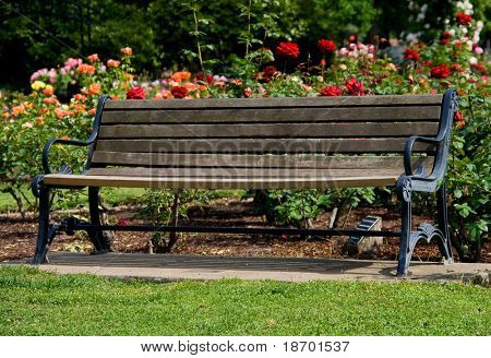 Old bench in the middle of rose garden