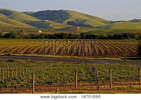 Napa Valley vineyard at sunset