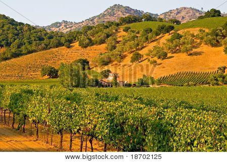 Napa Valley vineyard in California at sunset