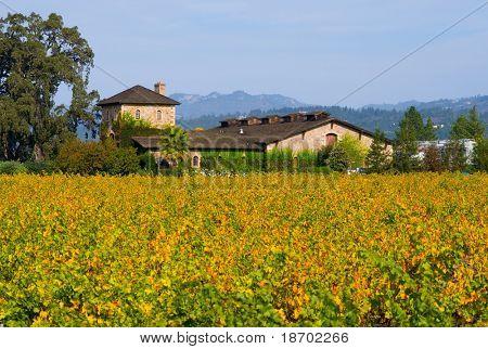 Napa Valley vineyard in Autumn