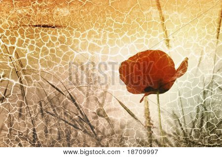 crackled picture of a red poppy