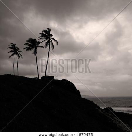 Palm Trees On The Coast